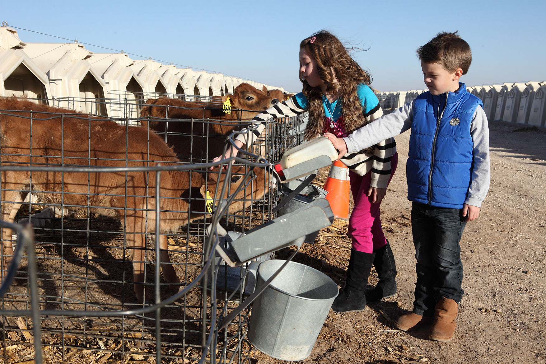 The Ballou kids help give bottles to the dairy's calves.