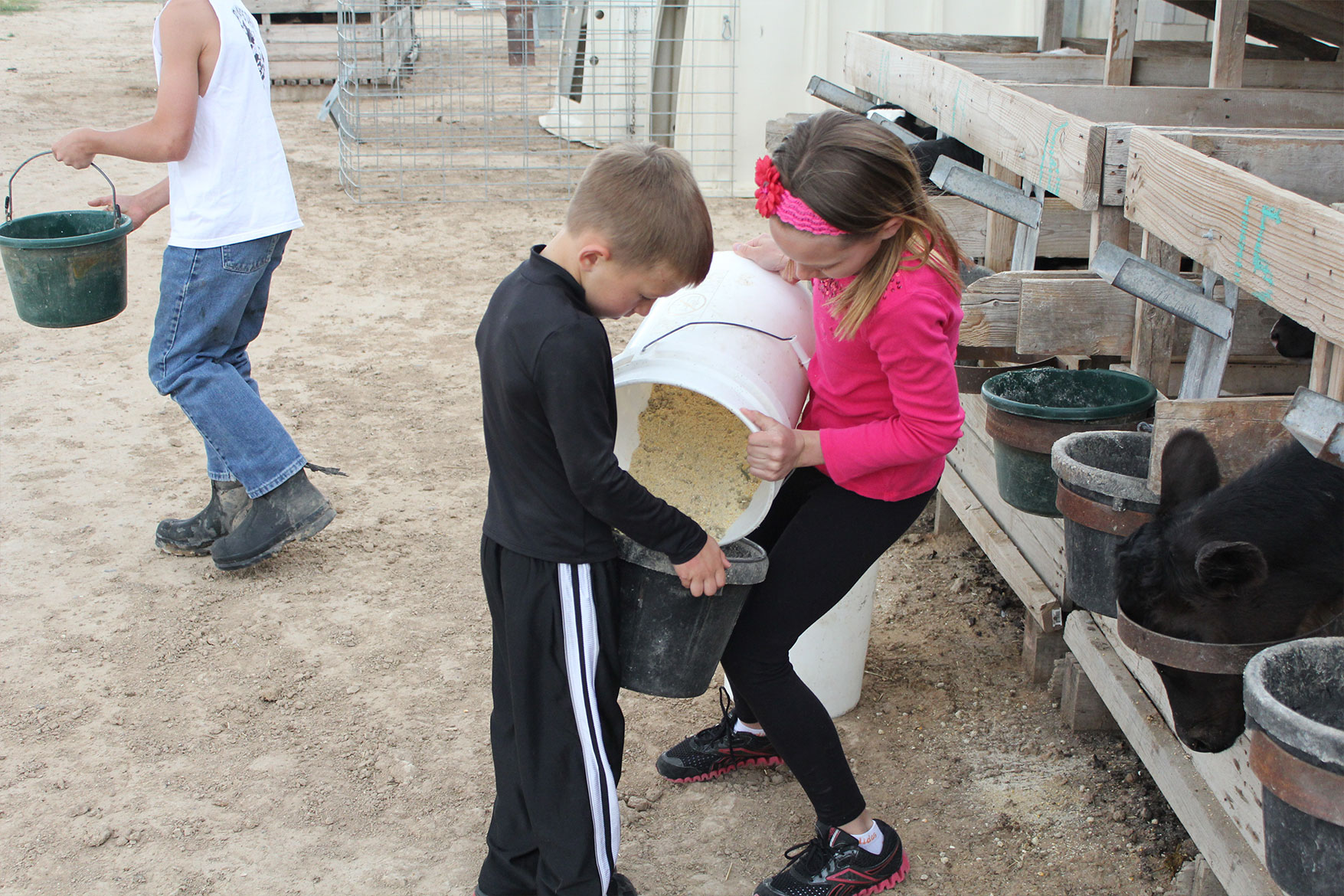 The Kullot kids help pour feed for the herd.