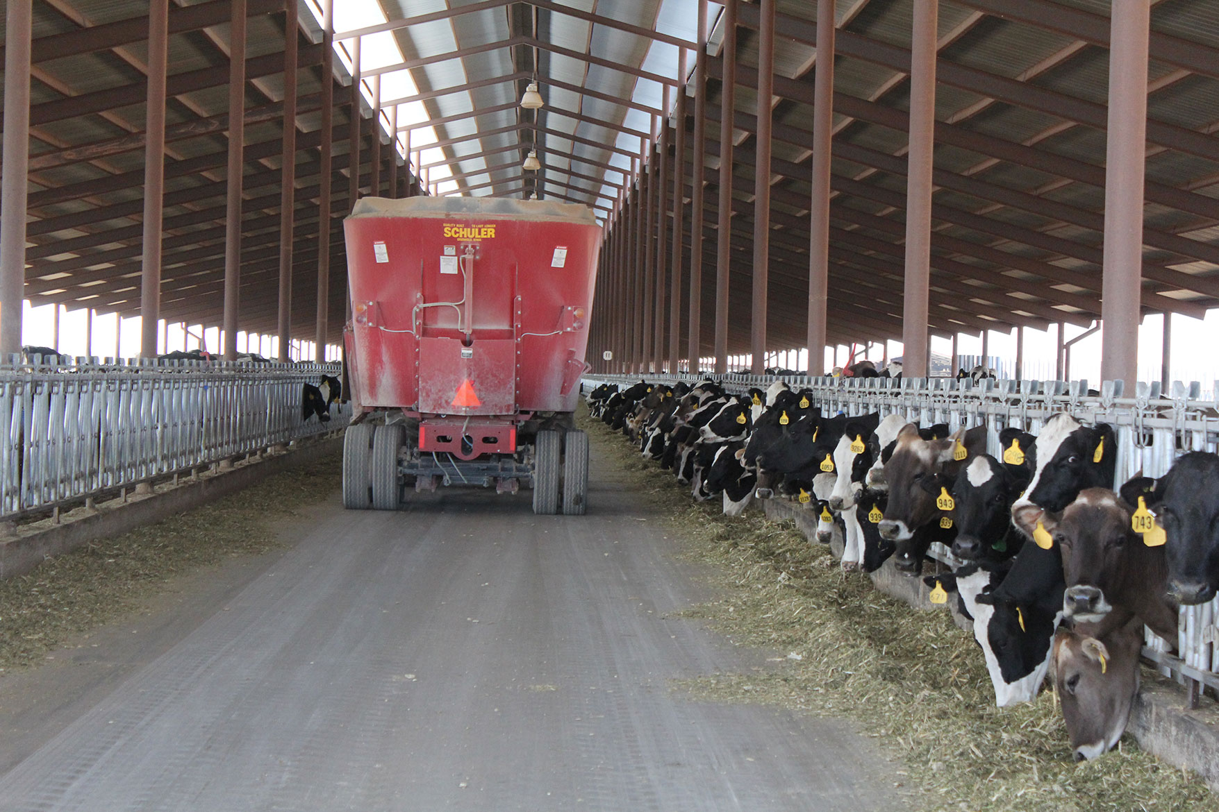 A feed truck drives down the barn's feed lane at Del Rio Dairy.