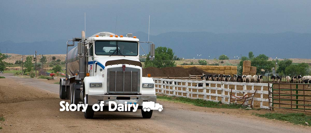 The Story of Dairy: Transporting Milk