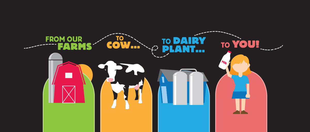 Ways Milk is Kept Pure Infographic