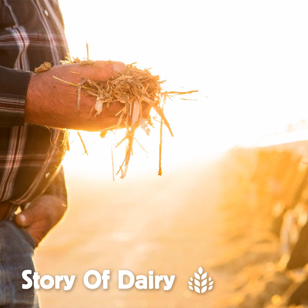 The Story of Dairy: Caring for the Cows Who Make Your Milk