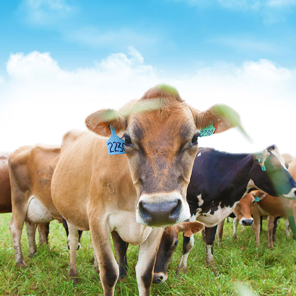 4 More Truths About Dairy Myths
